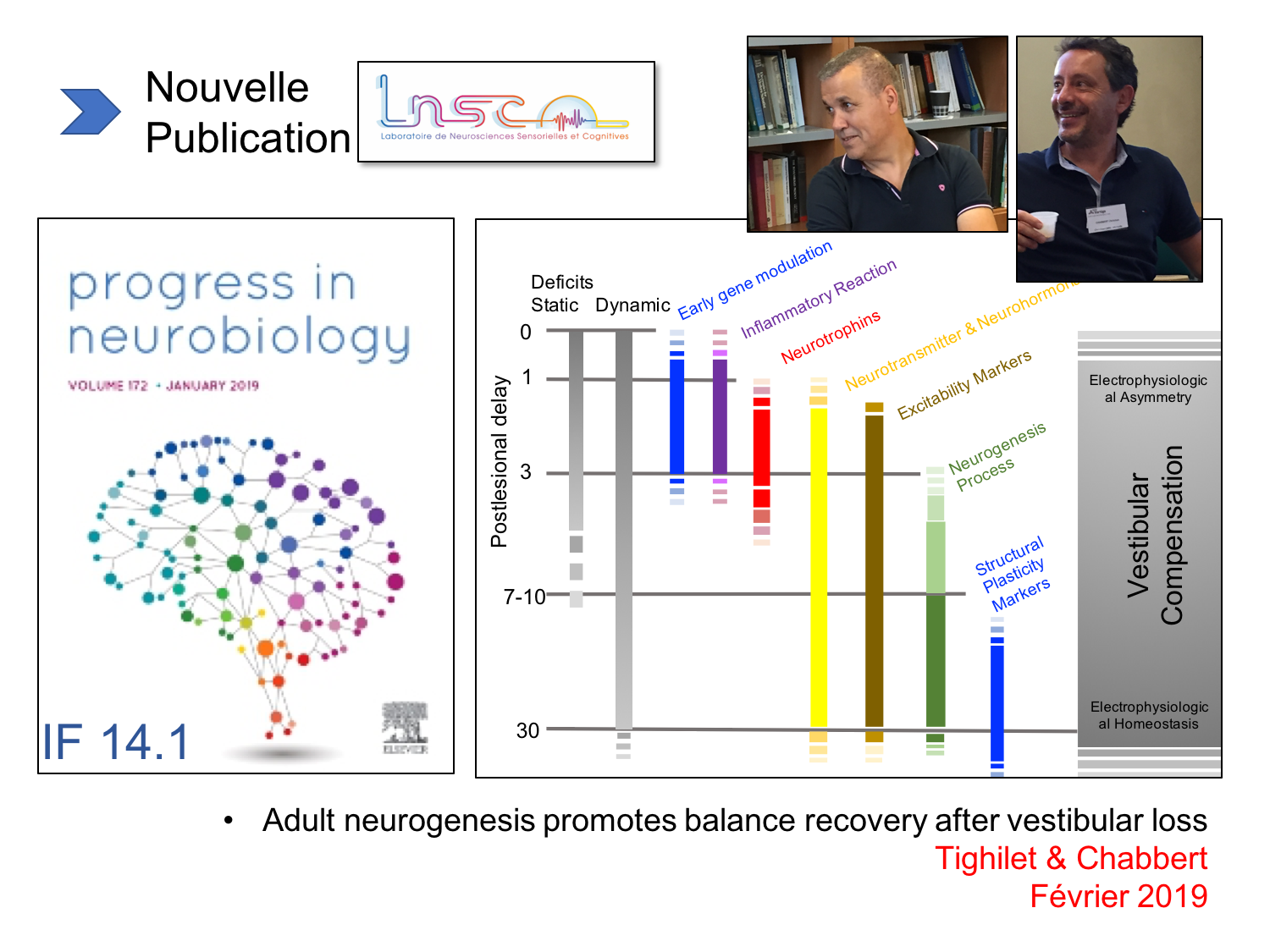LNSC - publication de fort facteur d'impact (14,1) dans Progress in Neurobiology